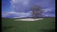 Yu Aishan – The Tree